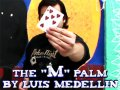 The M Palm by Luis Medellin